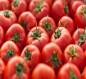 الزراعة: زيادة إنتاج محصول الطماطم إلى 185 طناً في مزارع البصرة