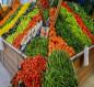 العراق يكشف حقيقة استيراد محاصيل من لبنان متوفرة محليا