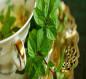 منها مواجهة السرطان… فوائد مذهلة تحققها 5 مشروبات عشبية مغلية