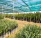 الاستعداد لزراعة (10,000) فسيلة من الاصناف النادرة والمميزة في كربلاء